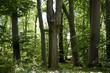 Wald und Wiese 13