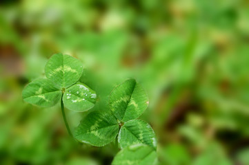 2 foglie