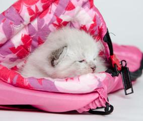 Cute kitten in sleeping bag