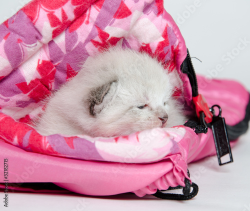 Cute kitten in sleeping bag
