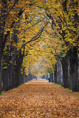 autumn forest trail / alley with jogger
