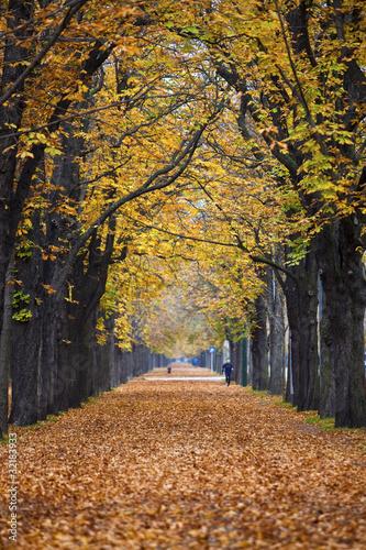 jesienny-las-szlak-zaulek-z-joggerem