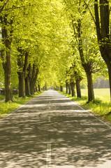 Straße gesäumt von Bäumen