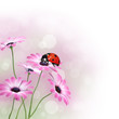Flowers with ladybird and copy space