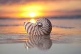 shell nautilus v moři, sunrise