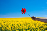 hand with pinwheel  in a field of yellow rape against the blue s
