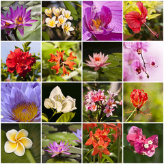 Collage de fleurs tropicales