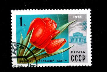 """Tulip """" Grand Theatre"""""""