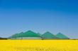 Leinwanddruck Bild - Biogasanlage im Rapsfeld