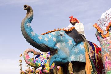 hand painted elephants, Jaipur, Rajasthan,India