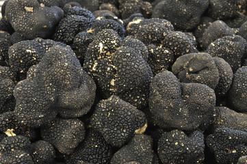 close up of black truffles