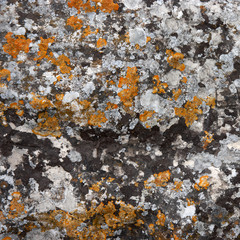 the surface of the stone covered by mosses