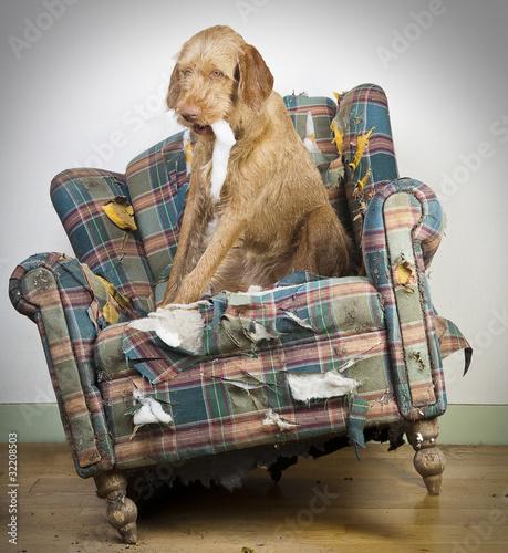 Dog demolishes chair