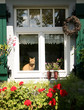 Fenster mit Katze