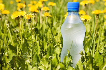 cold water bottle in a summer meadow.
