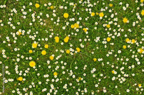 Foto op Canvas Madeliefjes grass