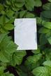 letter[aubergine]_01