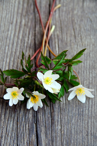 A bouquet of wood anemones