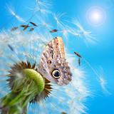Fototapete Schmetterling - Pusteblumen - Blume