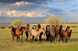 Fototapeten,pferd,fohlen,pferd,fohlen