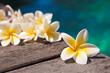 Fleurs de frangipanier au bord d'une piscine