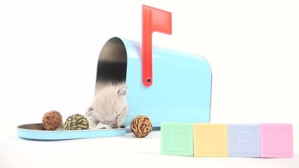 Cute baby kitten taking a nap inside of blue mailbox
