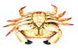 Back side of prepared crab