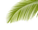 Fototapety Palm leaf