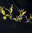 Tree branch in spring.
