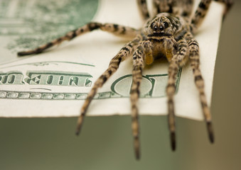 Spyder on money ready for attack