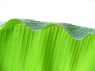 banna leaf texture: top fold