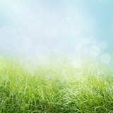 Spring nature background with grass and bokeh lights.