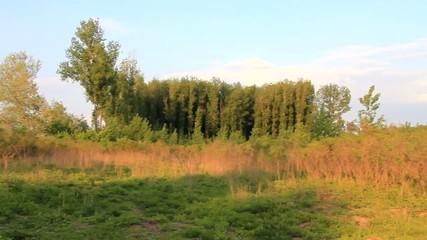 Auen - Landschaft
