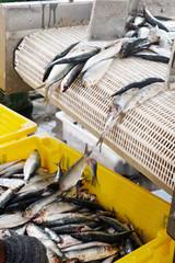 Industria ittica