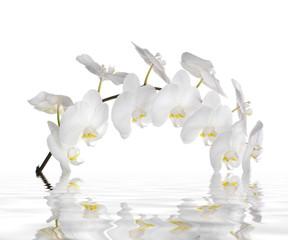 Riflesso in acqua di un'orchidea bianca