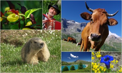 alpes, faune, flore et tradition