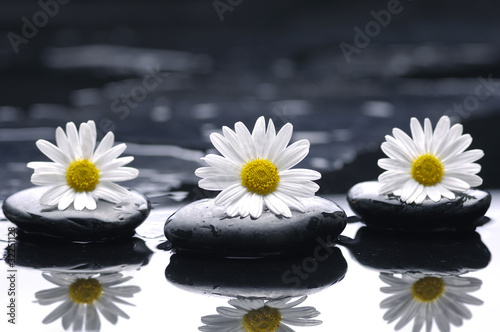 Fototapeta therapy stones and three marigold with reflection