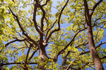 large tree branches with green leaves