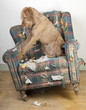 Dog demolishes chair