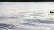Ente schwimmt vorbei