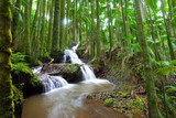 Waterfall flowing through tropical palm forest scene