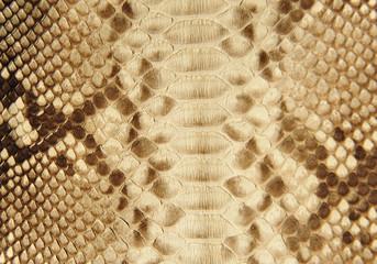 texture of snake skin.