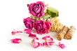 Dry roses and herbs on white. Shallow depth of field