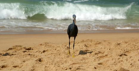 Herons on a sandy beach near the ocean