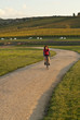 Female cyclist in golden light on path by vineyard
