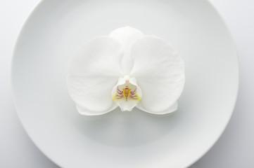 お皿と胡蝶蘭