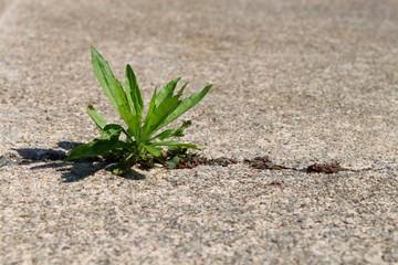 Pflanze in Beton