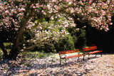 Fototapety park