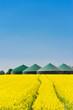 Biogasanlage hinter einem Rapsfeld 4