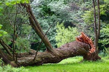 broken tree